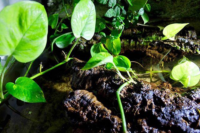 piante per tartarughe d acqua