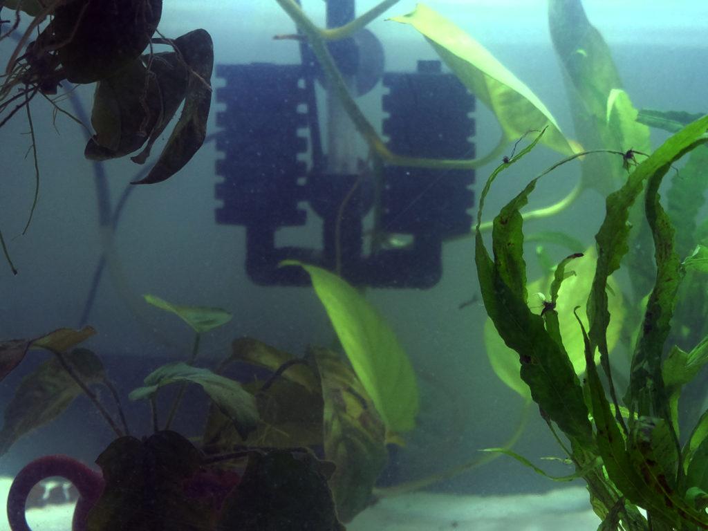 Filtro per axolotl