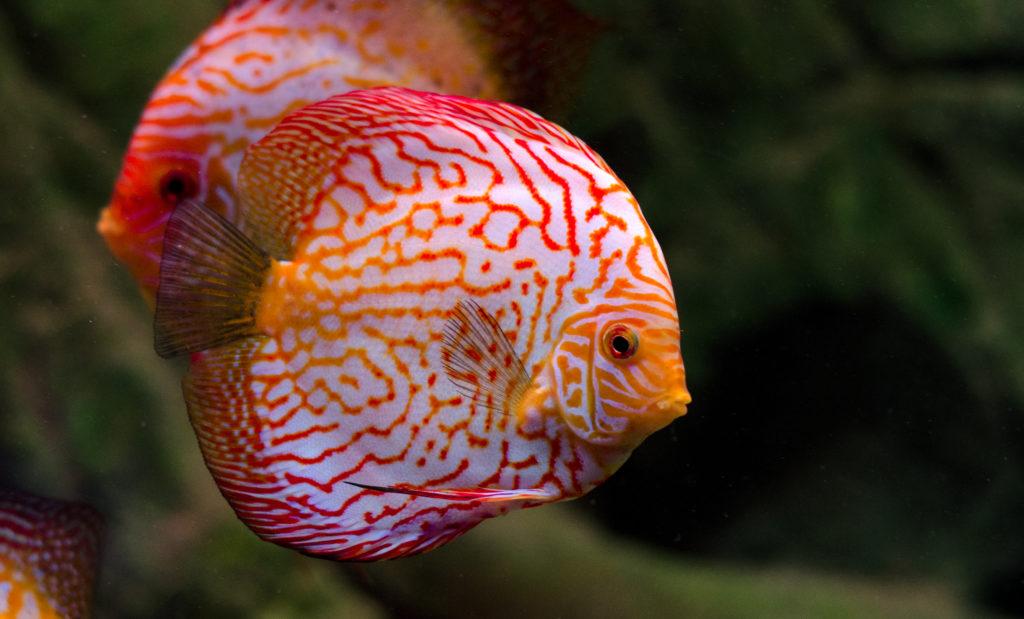 Pesci tropicali milano