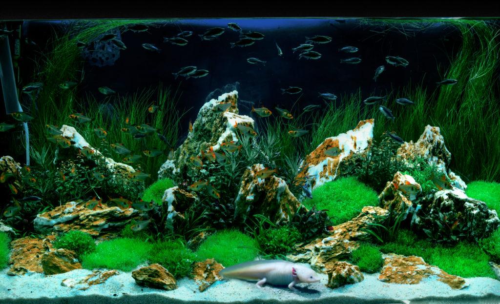 Installazione acquari Milano