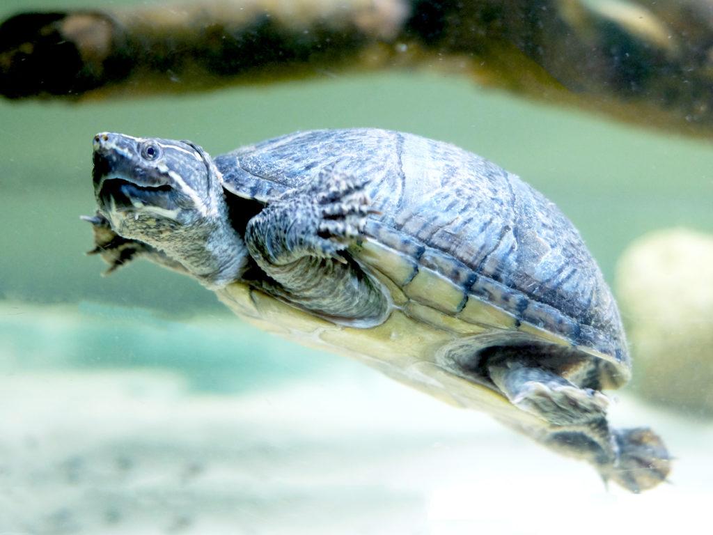 tartarughe a noleggio