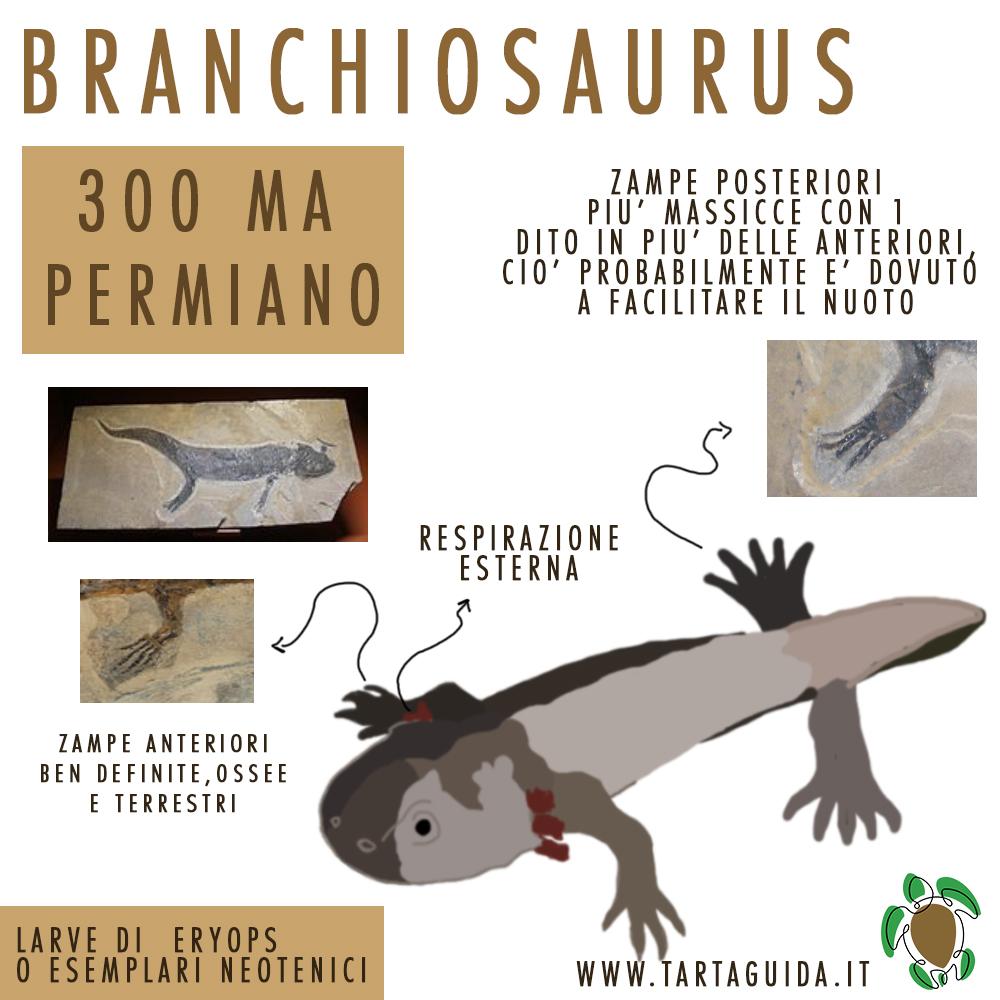 evoluzione degli axolotl