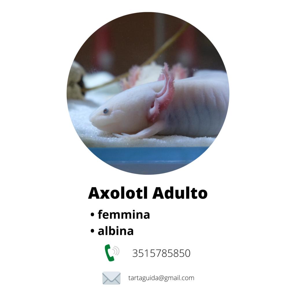 allevamento axolotl a milano