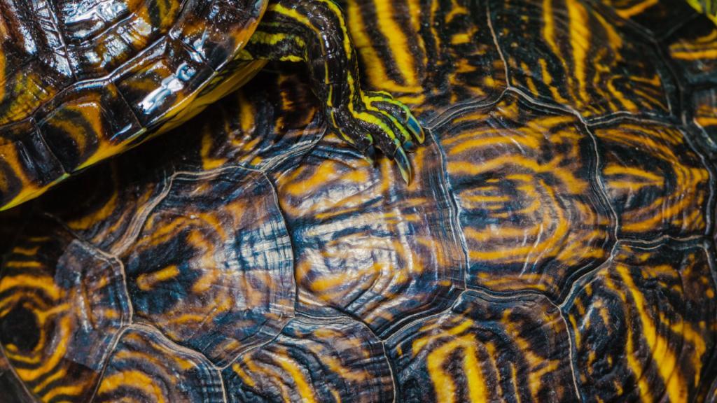 malattia ossea metabolica tartarughe