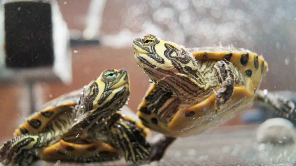 acquario per tartarughe d'acqua dolce fai da te