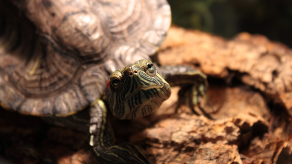 Lampade per tartarughe d'acqua dolce