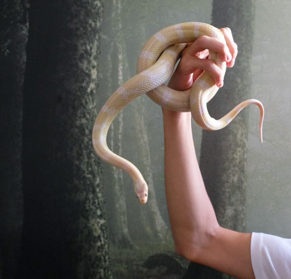 serpenti a noleggio milano
