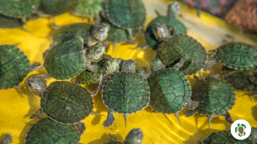 malattie tartarughe d'acqua dolce