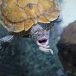 adozioni tartarughe consapevoli