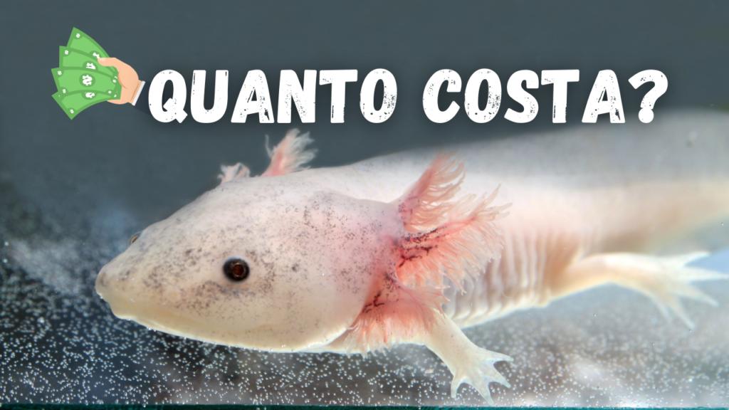 axolotl prezzo leucistico