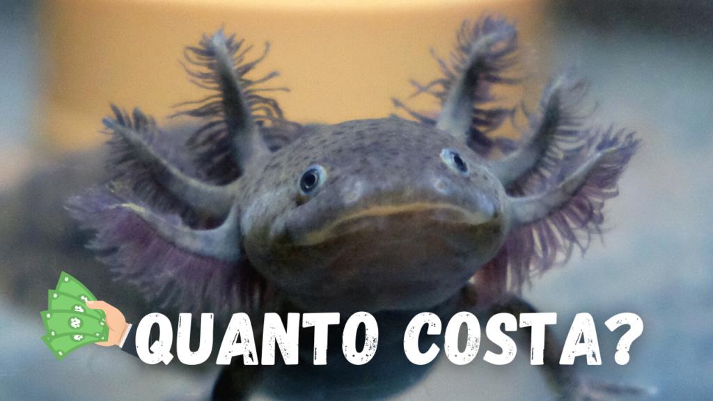 axolotl prezzo