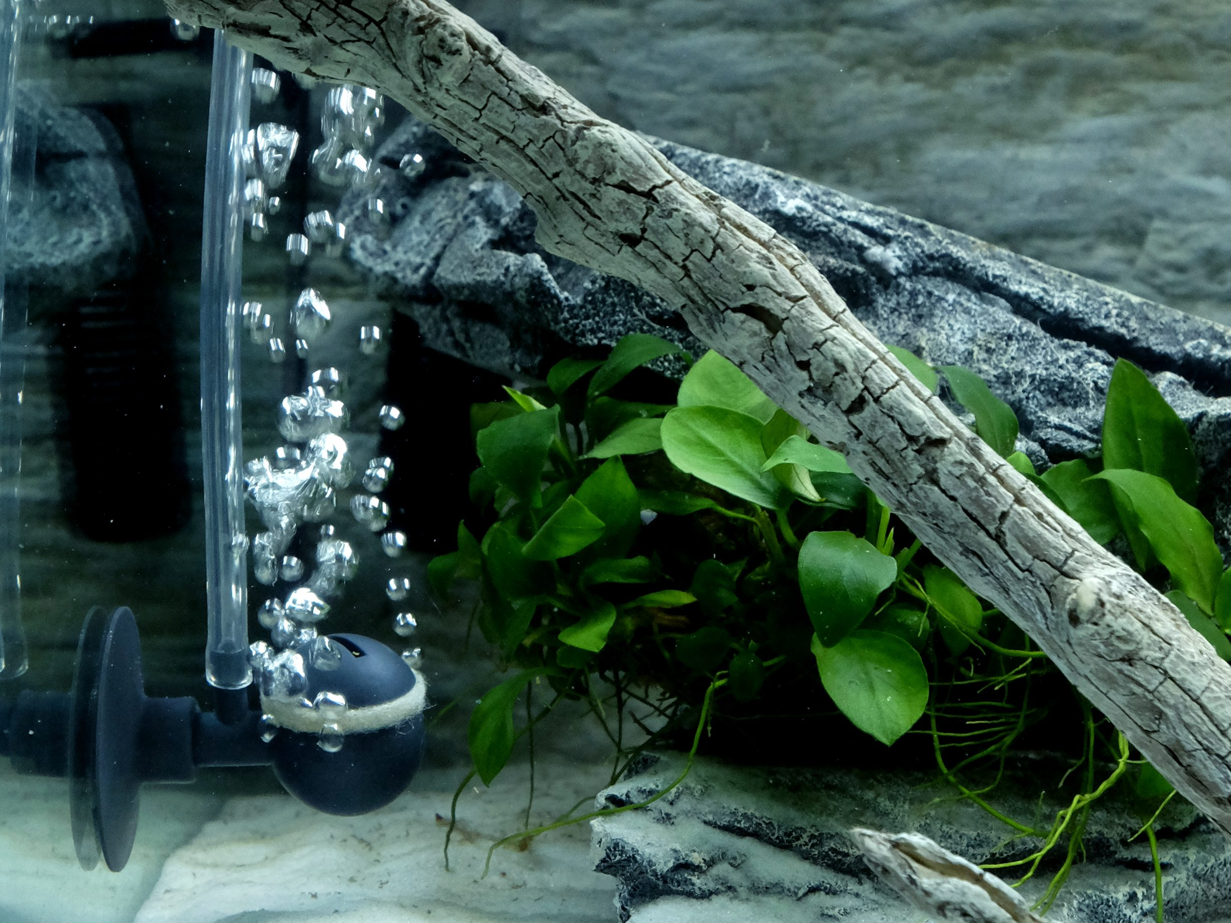 aeratore acquario axolotl