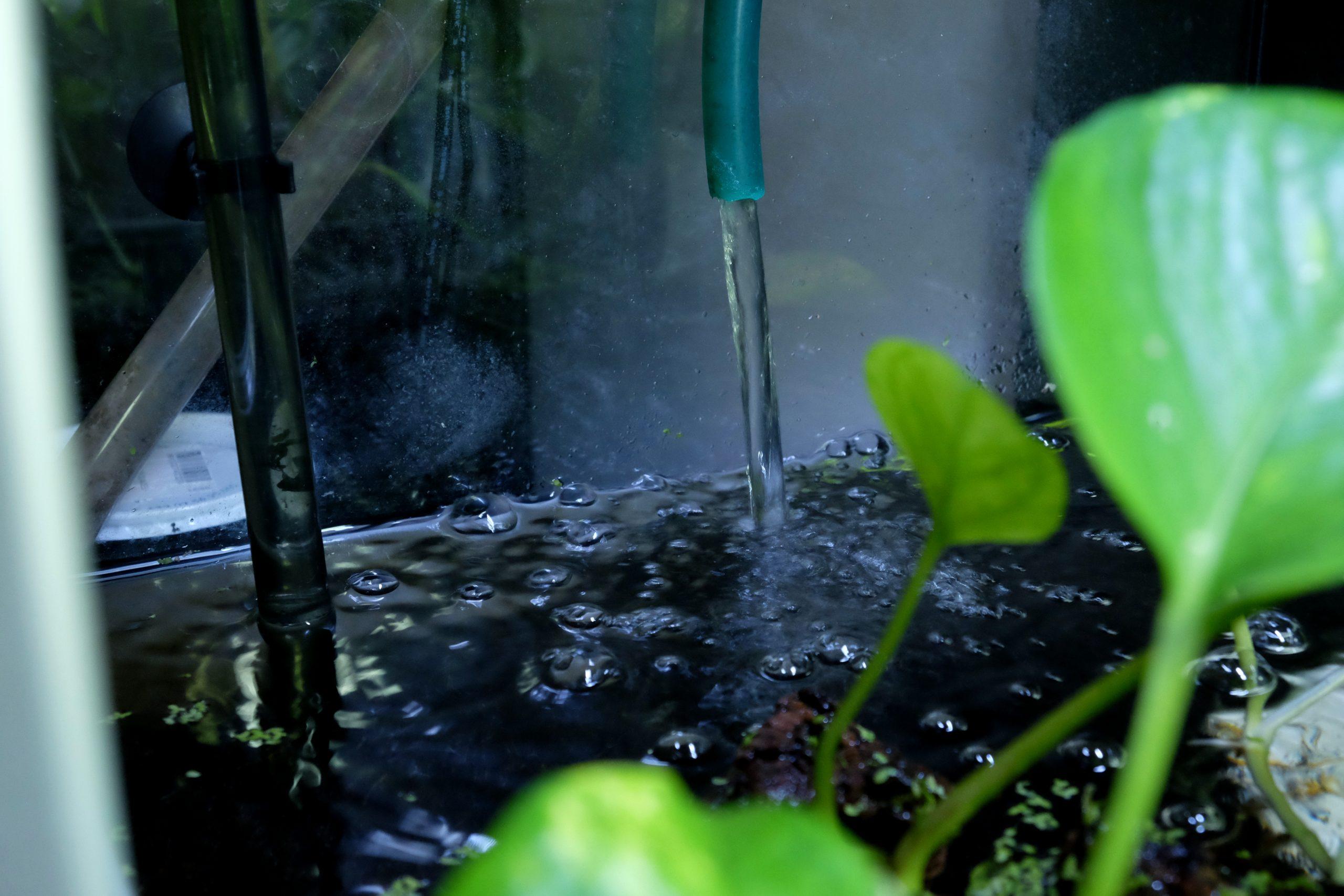 filtro esterno acquario