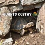 tartarughe di terra quanto costano?