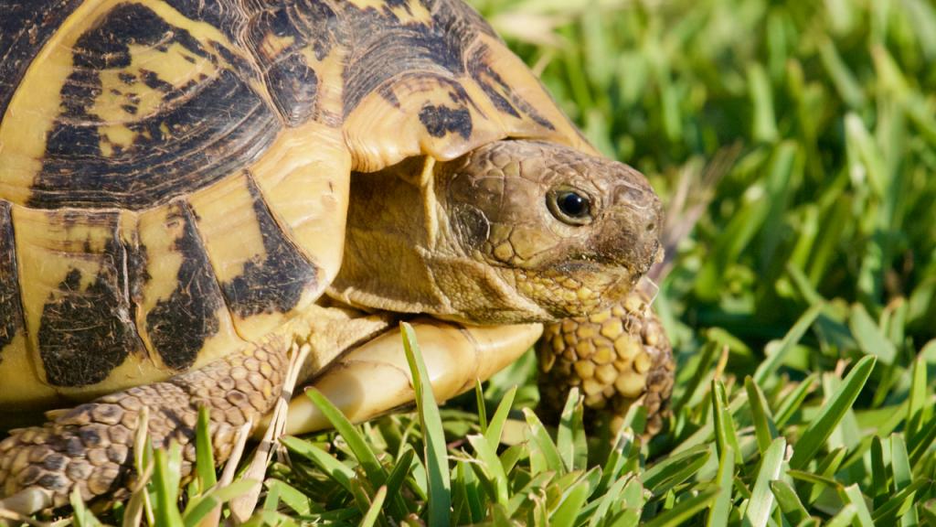 tartarughe di terra quanto costano