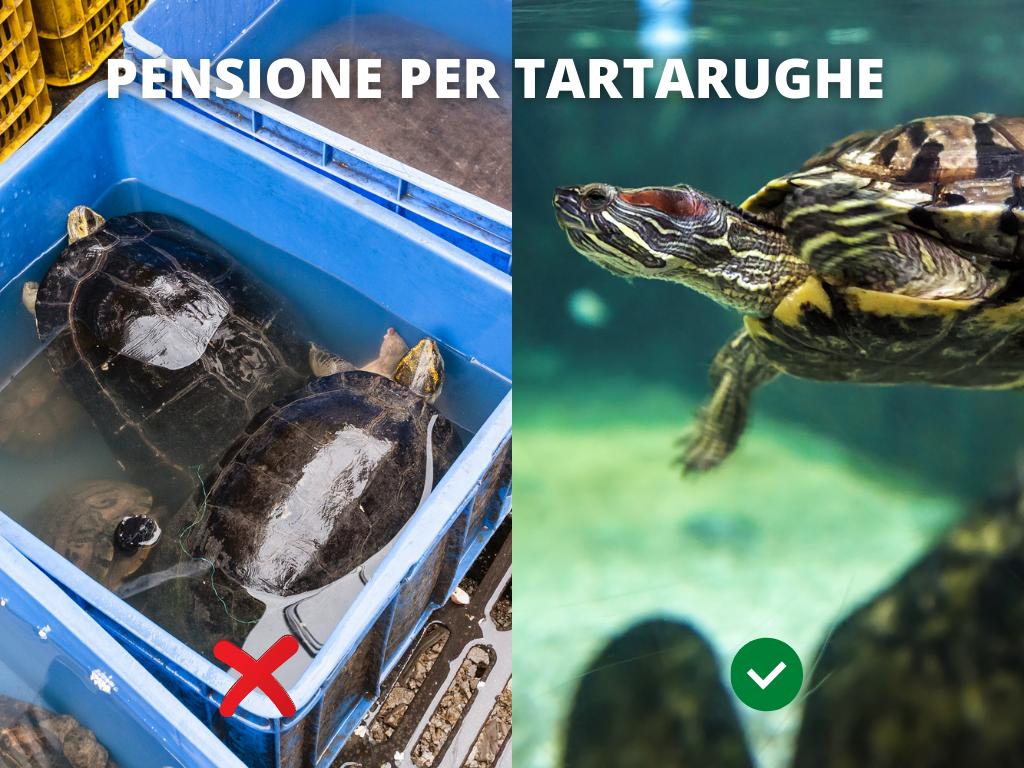 pensione tartarughe milano